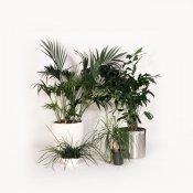 Grønne planter - Store